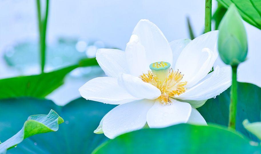 吉林菁英姐妹 守護真理不屈服暴力的人生(上)