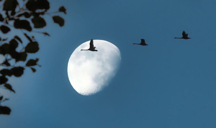【月球之謎】為何桂子月中落?為何它是宇宙飛船?